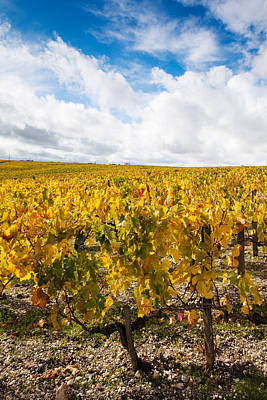 Haut Photograph - Chateau Lafite Rothschild Vineyards by Panoramic Images