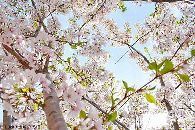 Flower Photograph - 2 Cherry Blossom 2014  by LLaura Burge