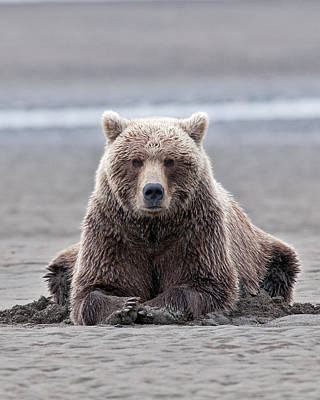Bear Photograph - Coastal Brown Bears On Salmon Watch by Gary Langley