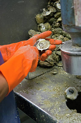 Commercial Oyster Processing Print by Jim West