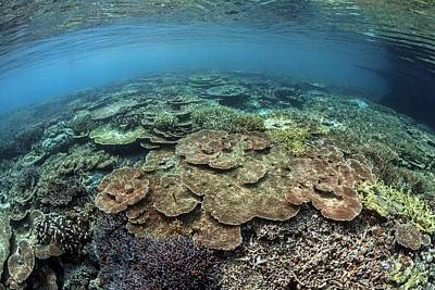 Coral Reef Print by Ethan Daniels