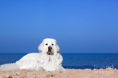 Friends Photograph - Cute White Dog On The Beach by Michal Bednarek