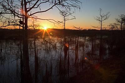 Cypress Swamp At Sunrise Print by Jim West