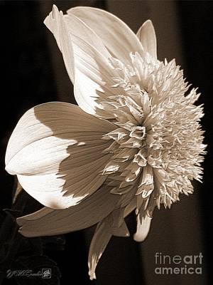 Dahlia Named Platinum Blonde Print by J McCombie