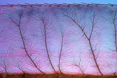 Airways Photograph - Damselfly Larva Gill by Marek Mis