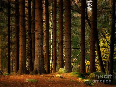 Deep Forest Print by Lutz Baar