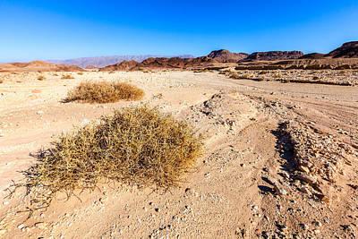 Desert Landscape Print by Alexey Stiop