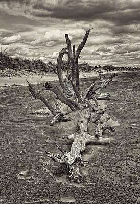 Desolate Print by Marcia Colelli