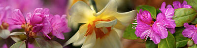 Early Spring Photograph - Details Of Flowers by Panoramic Images