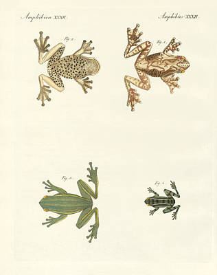 Cricket Drawing - Different Kinds Of Foreign Tree Frogs by Splendid Art Prints