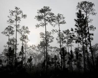 Slash Photograph - Early Morning Fog Landscape by Rudy Umans