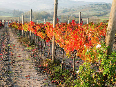 Winemaking Photograph - Europe, Italy, Tuscany by Julie Eggers