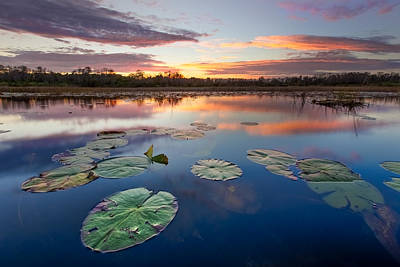 Everglades At Sunset Print by Debra and Dave Vanderlaan