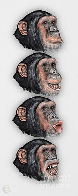 Chimpanzee Drawing - Facial Expressions Of Chimpanzees Pan Troglodytes - Zoo - Mimik Schimpansen - Stock Illustration by Urft Valley Art