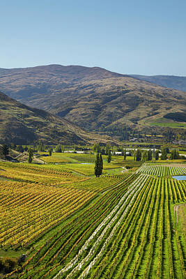 Grapevines Photograph - Felton Road Vineyard In Autumn by David Wall