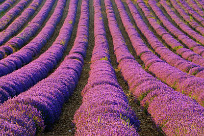 Provence Photograph - France, Provence Region by Jaynes Gallery