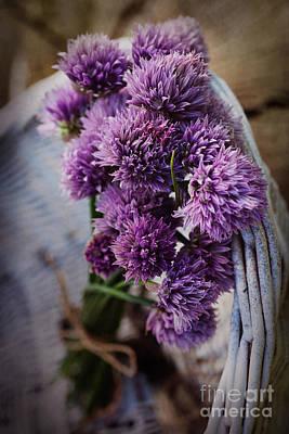Fresh Chives Flower Print by Mythja  Photography