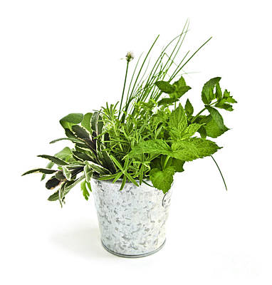 Chives Photograph - Fresh Herbs by Elena Elisseeva