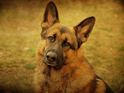 German Shepherd Dog Print by Sandy Keeton