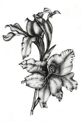 Gladiolus Drawing - Gladiolus by Irina Laskin