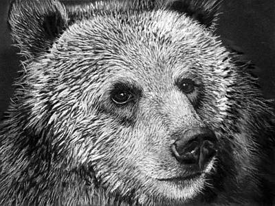 Grizzly Bear Print by Sharlena Wood