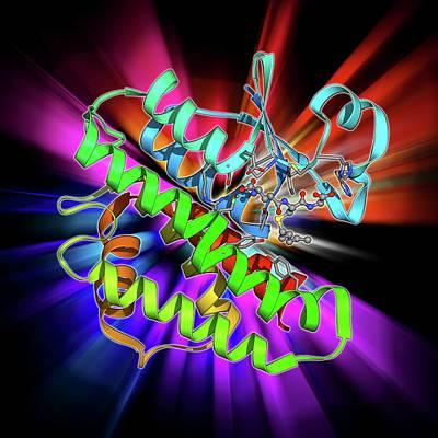 Molecular Structure Photograph - Gst Enzyme Conferring Ddt Resistance by Laguna Design