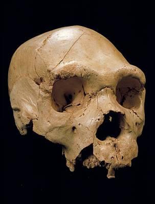 Homo Heidelbergensis Skull (cranium 5) Print by Javier Trueba/msf