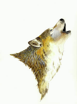 Wolf Watercolor Painting - Howling Wolf by Michael Vigliotti