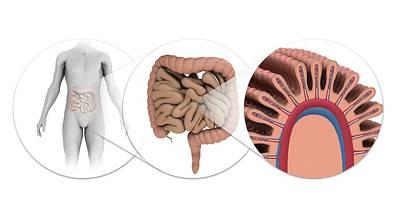 Microscopic Art Photograph - Human Intestines by Mikkel Juul Jensen