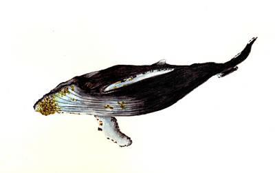 Humpback Whale Print by Michael Vigliotti