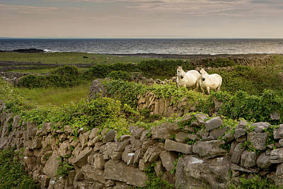 Inishmore Island Print by Tom Norring