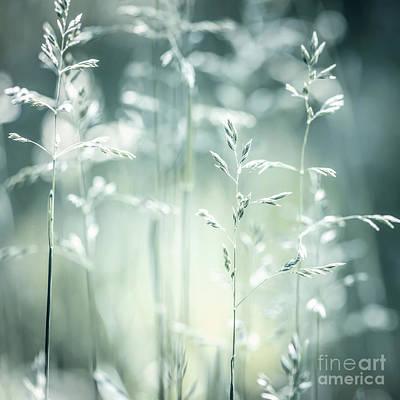 June Green Grass Flowering Print by Elena Elisseeva
