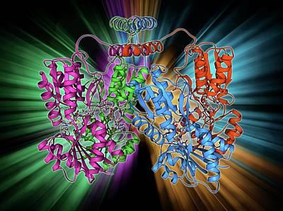 Molecular Structure Photograph - Lac Repressor Molecule by Laguna Design