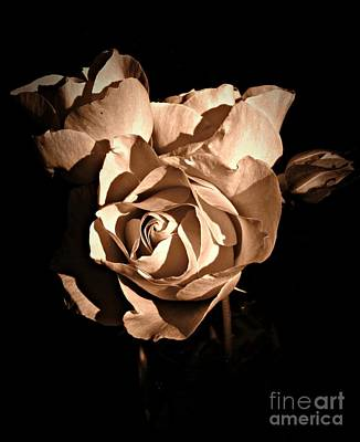 Neurotic Images Photograph - Last Roses Of Summer Sepia by Chalet Roome-Rigdon