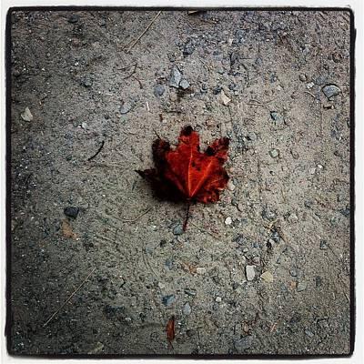 Dawid Photograph - Leaf by Marcin and Dawid Witukiewicz