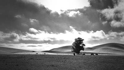 Horse Photograph - Livermore Ca by Casey Merrill