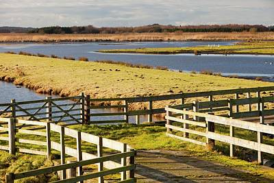 Martin Mere Bird Reserve Print by Ashley Cooper