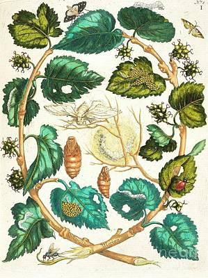 Metamorphosis Insectorum Print by Pg Reproductions