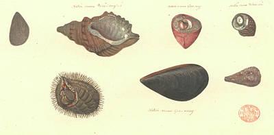 Molluscs Print by Natural History Museum, London