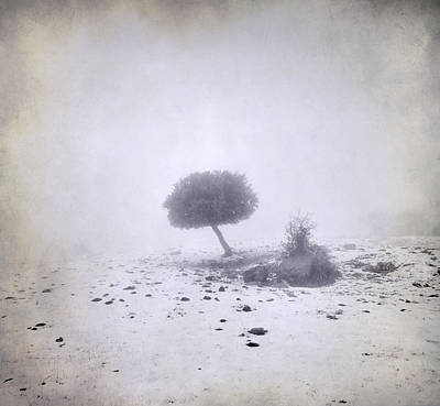 Mountain Tree Print by Guido Montanes Castillo
