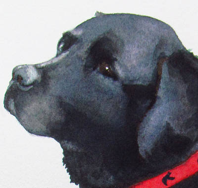 Black Lab Watercolor Painting - Moxie by Sarah Buell  Dowling