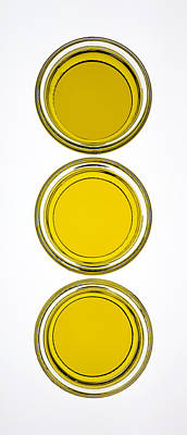 Olive Oil Print by Frank Tschakert