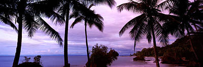 Colombia Photograph - Palm Trees On The Coast, Colombia by Panoramic Images