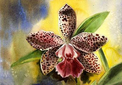 Pink Cattleya Orchid Print by Alfred Ng