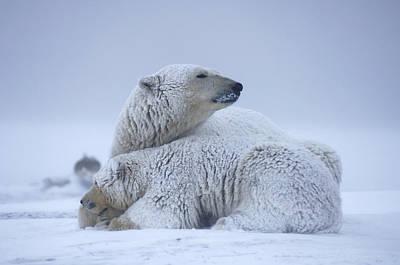 Bear Photograph - Polar Bear Sow With Cub Resting by Steven Kazlowski