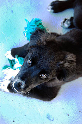 Fuzzy Golden Puppy Photograph - Puppy In Blue by Natalie Lise Harvey