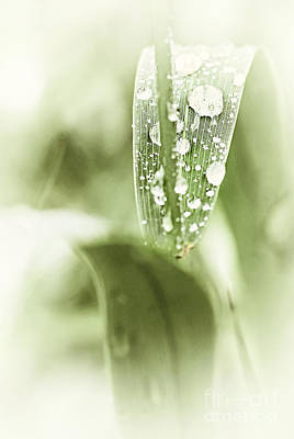Droplet Photograph - Raindrops On Grass by Elena Elisseeva