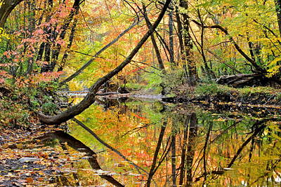 Reflections Print by Frozen in Time Fine Art Photography