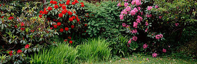 State Parks In Oregon Photograph - Rhododendrons Plants In A Garden, Shore by Panoramic Images