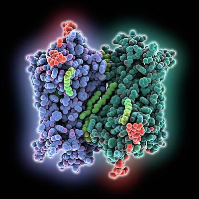 Rhodopsin Molecule Print by Laguna Design